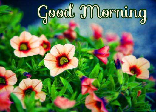 Small Cute Flowers Good Morning Image