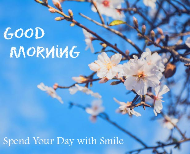 Spring Flowers with Good Morning Start Your Day with Smile Message