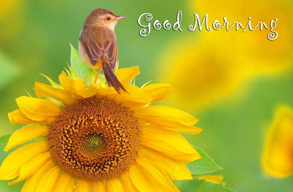 56+ Today Good Morning Images (hd quality)