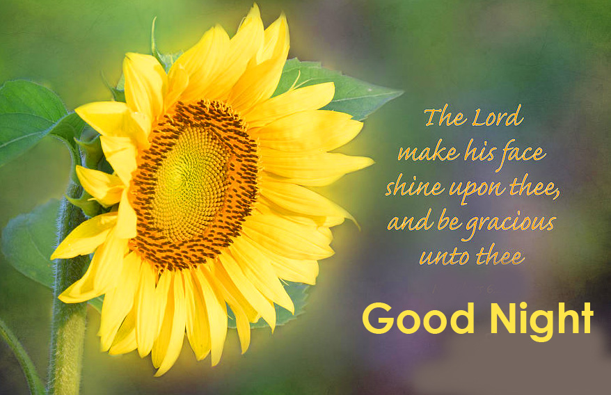 Sunflower with Prayer and Good Night Picture HD