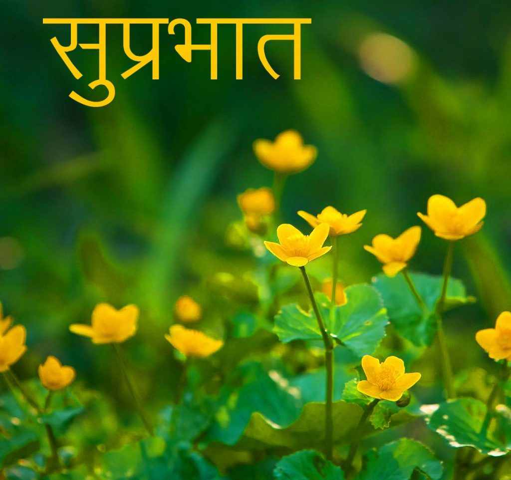 61+ Flowers Suprabhat Pictures and Photos for Free Download 2021