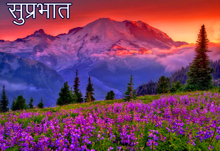 Suprabhat with Mountain Flowers Scenery