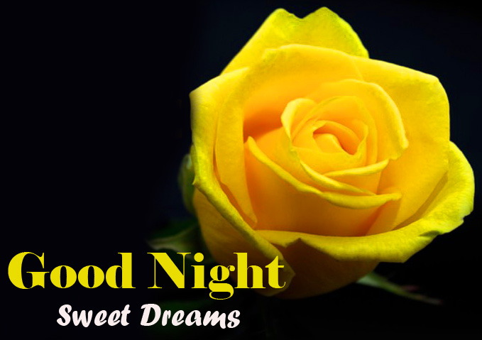 Yellow Rose Good Night Sweet Dreams Picture