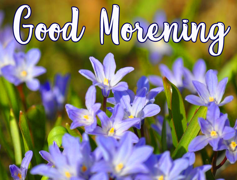 Adorable Small Flowers Good Morning Picture