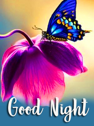 Awesome Butterfly and Flower Good Night Image