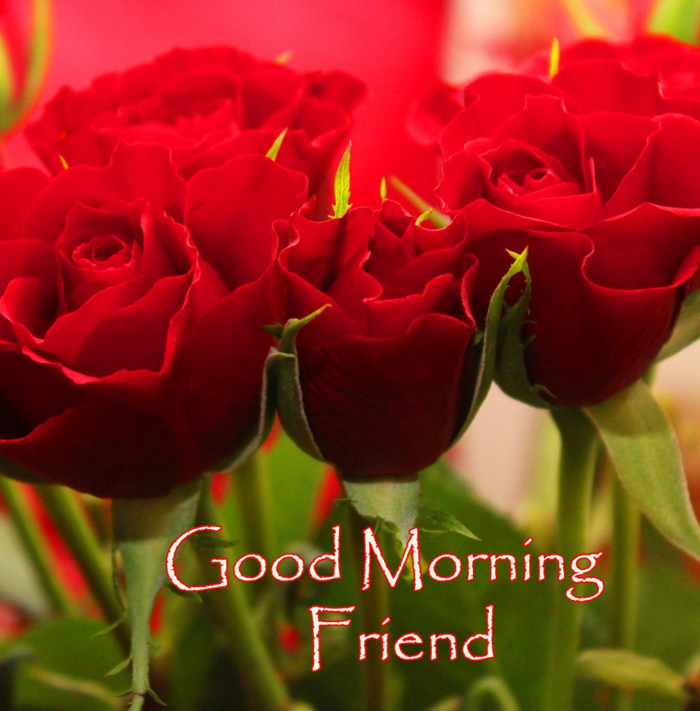 56+ Good Morning My Friend Images