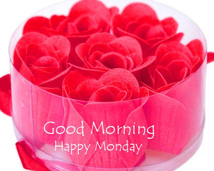Blooming Red Roses Good Morning Happy Monday Picture