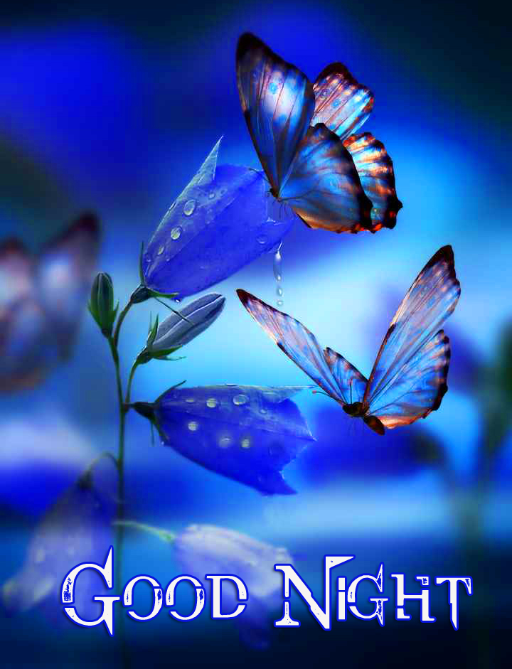 Blue Flowers and Butterflies Good Night Image