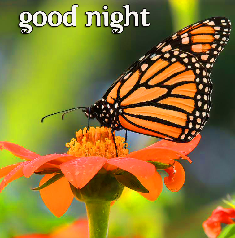Butterfly Sweet Good Night Image
