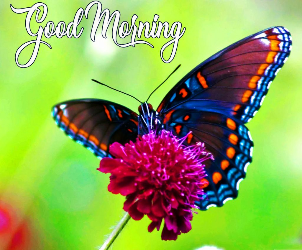 37+ Good Morning Images Flowers