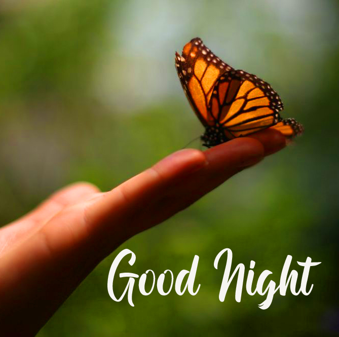 Butterfly on Hand with Good Night Wish