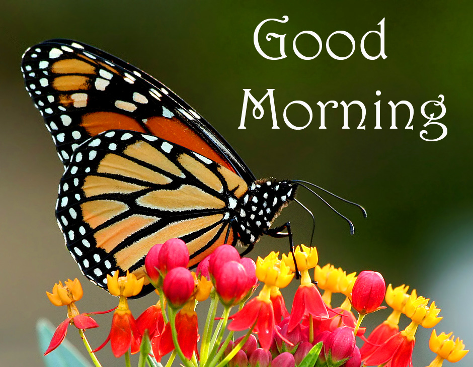 Colorful Flowers and Butterfly Good Morning Pic