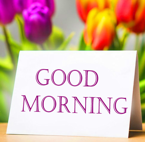 Cute Colorful Flowers Good Morning Image HD