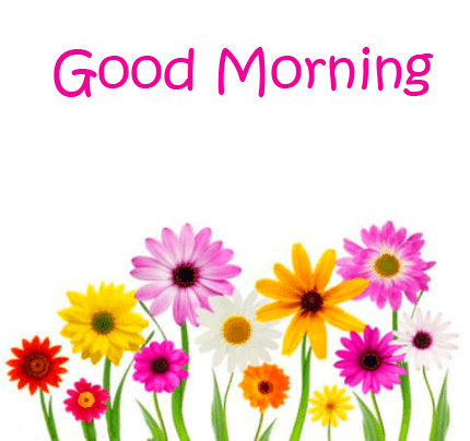 Cute Colorful Flowers Good Morning Wallpaper