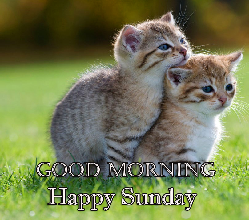 Cute Kittens Good Morning Happy Sunday Picture