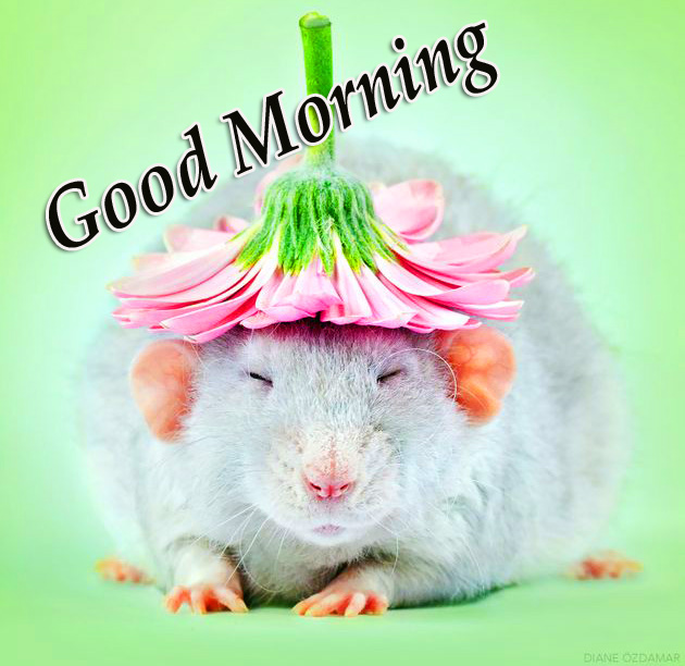 Cute Rat and Flower with Good Morning Wish