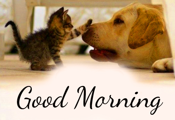 Cute and Funny Cat and Dog Good Morning Image