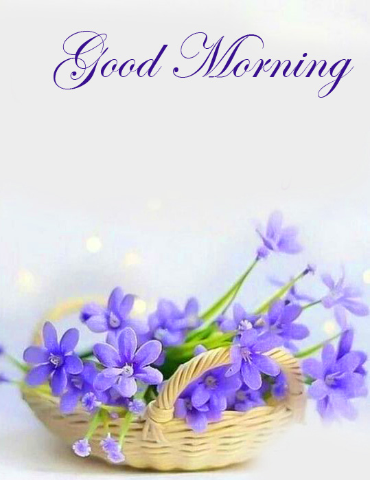 Flowers Basket Good Morning Picture