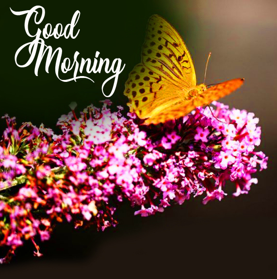 Flowers and Butterfly Good Morning Image