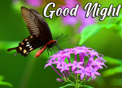 Flowers and Butterfly Good Night Image