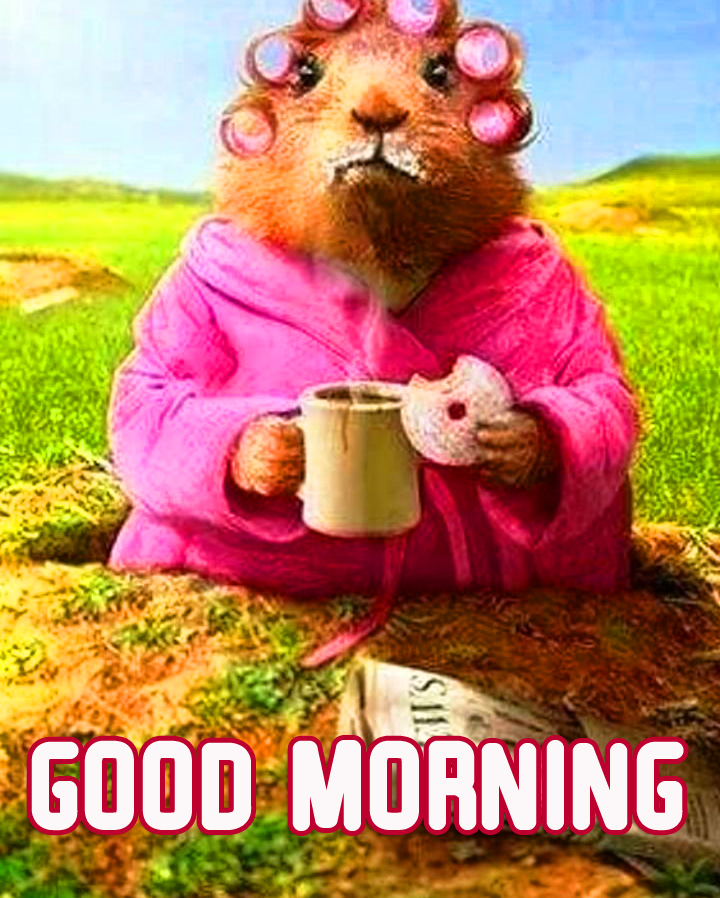 Funny Creature Good Morning Image