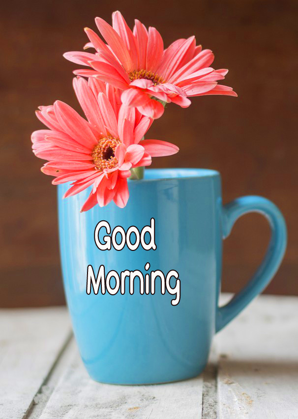 Gerbera Flowers in Cup with Good Morning Wish