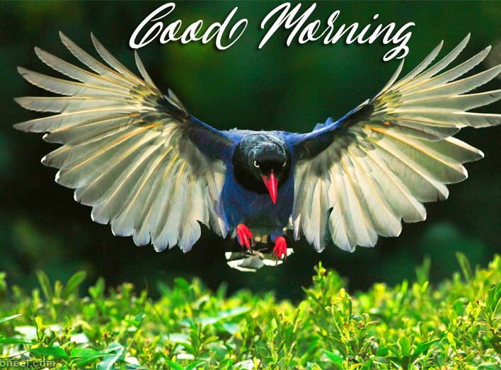 Good Morning Bird Flying Picture