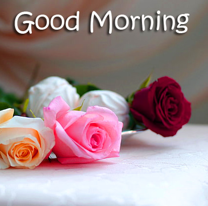 Good Morning Colorful Roses Picture