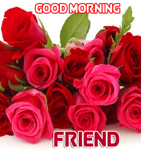 Good Morning Friend Red Roses Picture