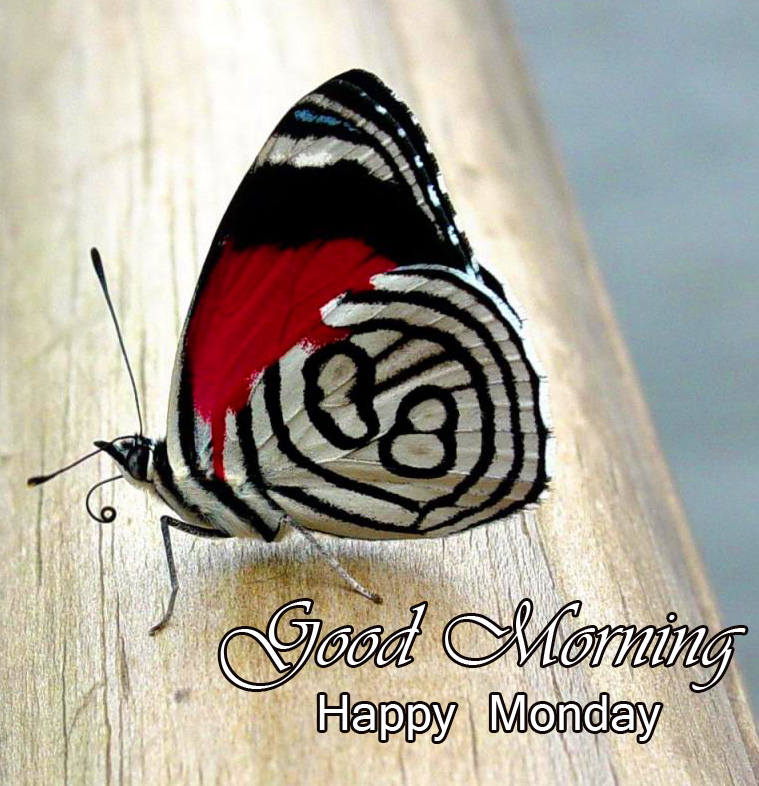 Good Morning Happy Monday Butterfly HD Picture