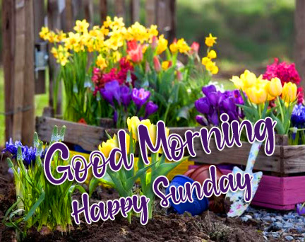 Good Morning Happy Sunday Colorful Flowers Wallpaper