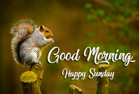 Good Morning Happy Sunday Squirrel Picture