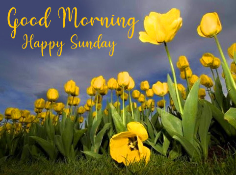 Good Morning Happy Sunday Yellow Flowers Picture