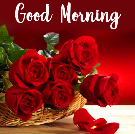 Good Morning Red Roses Picture