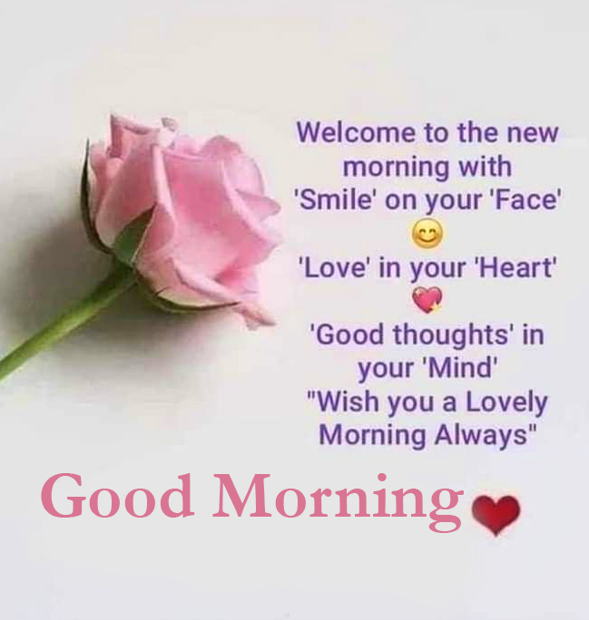 Good Morning Rose with Quote