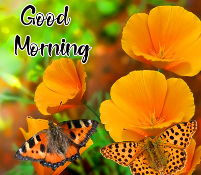 Good Morning Yellow Cute Flowers Picture