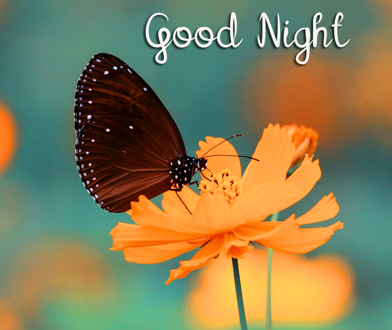Good Night HD Butterfly and Flower Picture