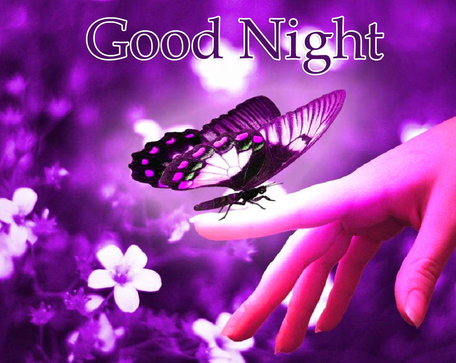 Good Night Purple Butterfly and Floral Wallpaper