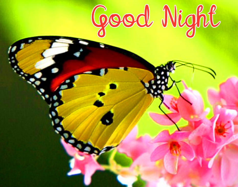 Good Night Wish with Butterfly and Roses