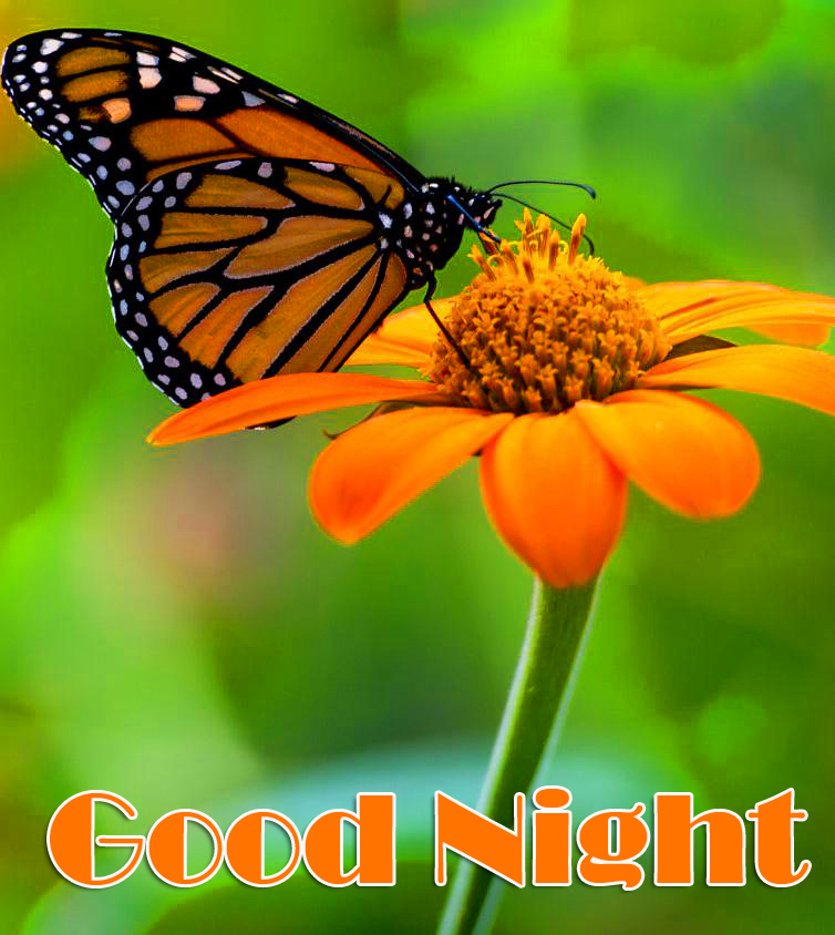 HD Flower and Butterfly Good Night Image
