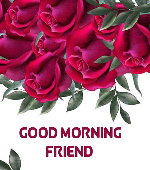 HD Pink Roses Good Morning Friend Image
