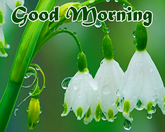 HD White Flowers Good Morning Picture