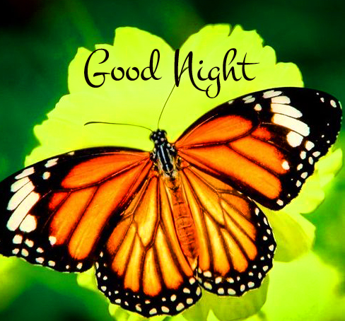 Latest Butterfly Good Night Image