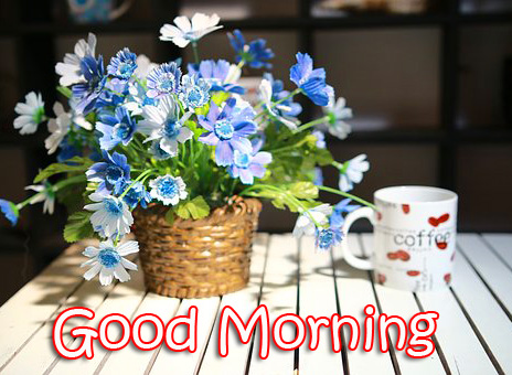 Latest Flowers Good Morning Picture
