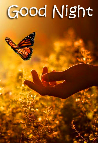 Lovely Butterfly Good Night Image