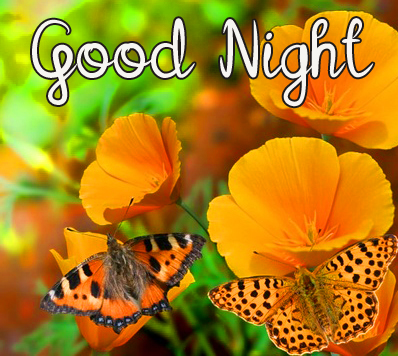 Lovely Flowers and Butterfly Good Night Image