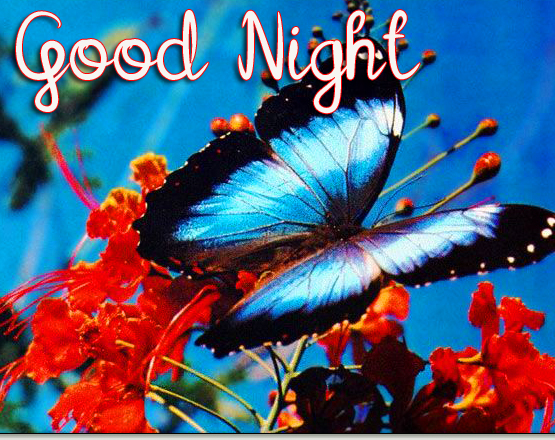 Lovely HD Butterfly Good Night Pic
