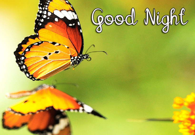 Nice Butterfly Good Night Image