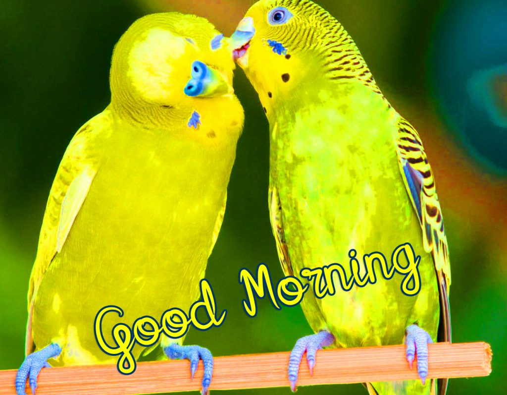 38+ Good Morning Images HD 1080p Download 2021