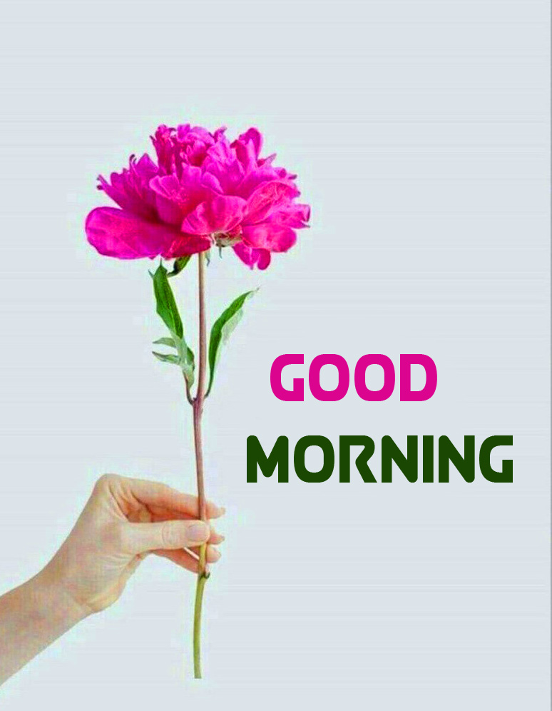 Pink Flower Good Morning Picture